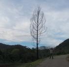 aku dan pohon itu - untuk cerpen